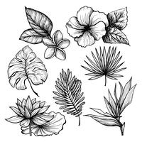 Conjunto de folhas tropicais