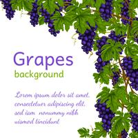 Grapes background wallpaper vector