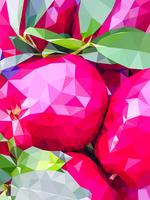 Polygon pink apple vector
