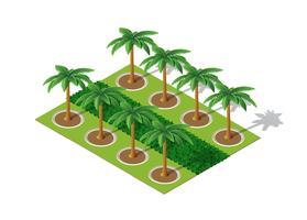 Arbres d'un palmier du parc