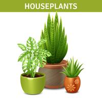 Realistic Houseplants Composition
