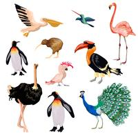 Exotic Birds Set