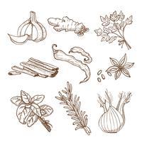 Ensemble d'herbes et d'épices dessinés à la main