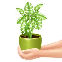 Holding A Houseplant Illustration  vector