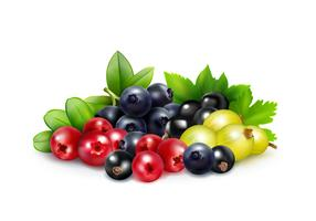 Berry Mix Realistic Concept  vector