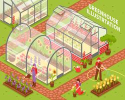 Colored Greenhouse Composition