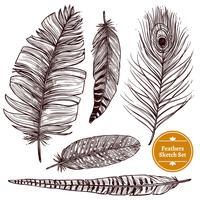 Set de plumas dibujadas a mano