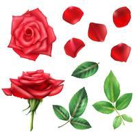 Rosenblume und Blumenblätter eingestellt