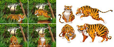 Tiger i skogen