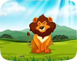 Lion Sitting in Grassland