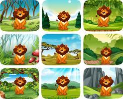 Paquete de diferentes escenas de león