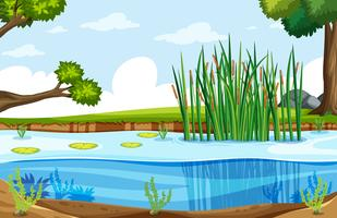A nature swamp landscape vector