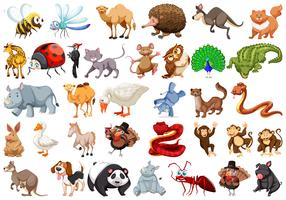 Set van cartoon dieren
