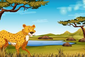 Scena della savanna con ghepardo