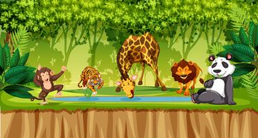 Wild animals in jungle