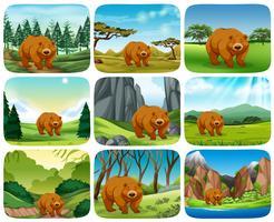 Brun björn i naturen scener