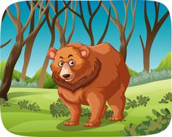 A grizzly bear in forest