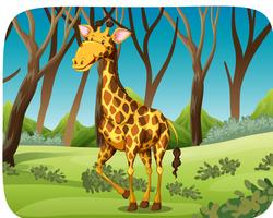 A giraffe in forest