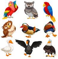 Conjunto de pie de pájaros diversos