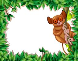 A tarsier in nature frame