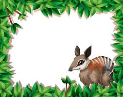 Un numbat sur la nature