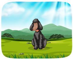 Cane che si siede sull'erba vicino alla montagna