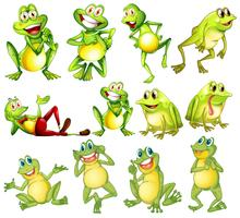 Set of different frogs