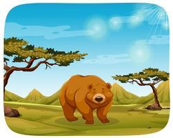 En björn i naturen scen