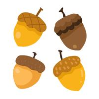 acorn vector collection design