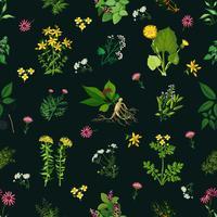 Medicinal Herbs Seamless Pattern