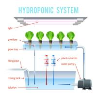 Hydroponics Colored Infographic