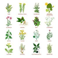 Ícones de ervas medicinais planas