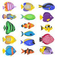 Conjunto de peixes exóticos