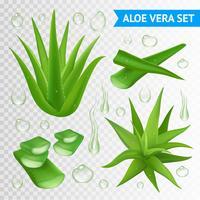 Aloe Vera planta em fundo transparente