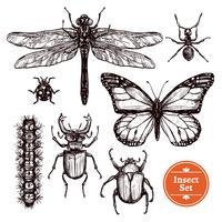 Conjunto de insetos de mão desenhada