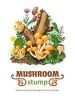 Wild Mushroom Species Growing On Stump