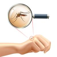 Mosquito on hand vector