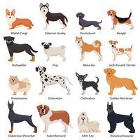 Conjunto de ícones coloridos de cães de raça pura