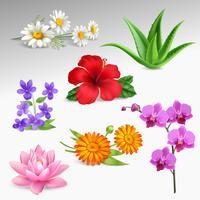 blommor Växter Realistisk Ikoner Samling