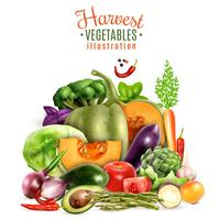Harvest Of Vegetables Illustration vector