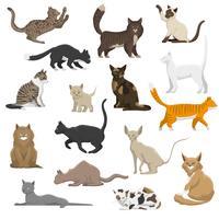 Gato doméstico raças coleção de ícones plana
