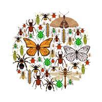 Ilustración vectorial de insectos