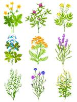 Collection Of Wild Herbs