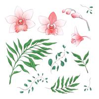 Orchid Tropical Flowers Floral Elements in hand draw Style. Vector