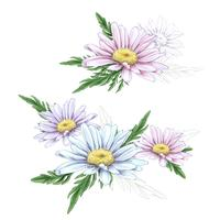 Daisy flower drawing. Vector hand drawn engraved floral set. Chamomile black ink sketch.