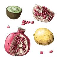 Mettre des fruits. Citron, grenat, kiwi. Illustration vectorielle