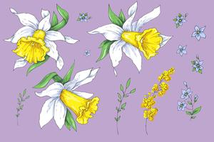 Set of different flowers of Narcissus. Hand drawn sketch. vector
