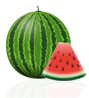 watermelon ripe juicy vector illustration