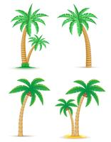 Palm árbol tropical establece iconos vector illustration
