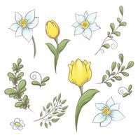Conjunto de flores tulipas. Mão, desenho, vetorial, ilustração